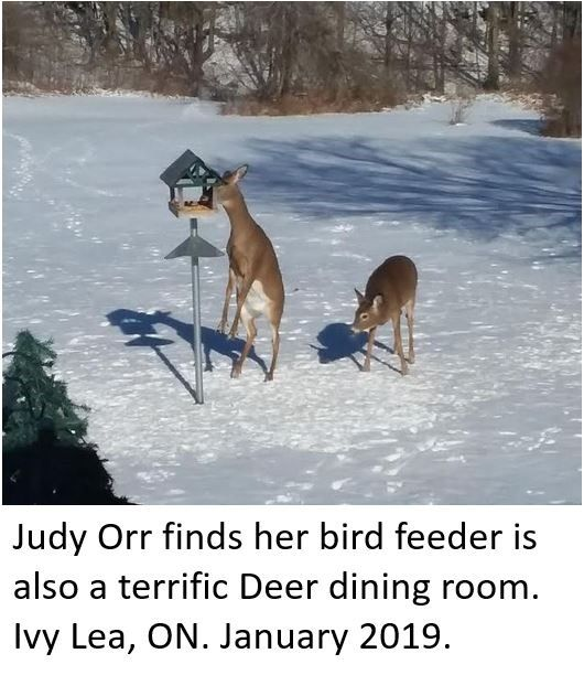 Deer Dining Room